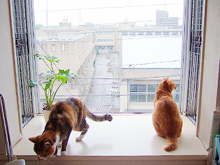 windowcats04.jpg