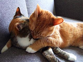 hug03.jpg