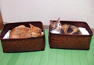 sleeping_separately01.jpg