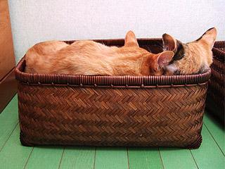 sleeping_separately03.jpg