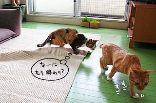 hito_mishiri09.jpg