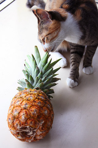 pineapple01.jpg
