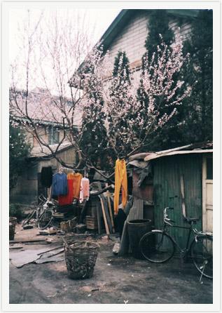 beijing_spring.jpg