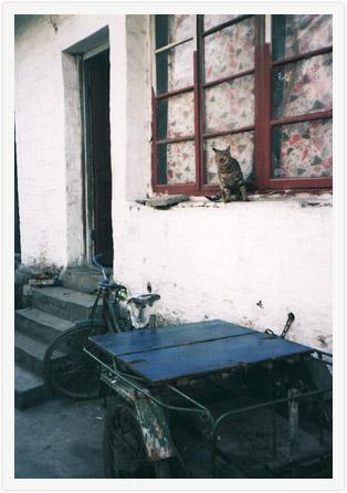 koshyu_cat.jpg