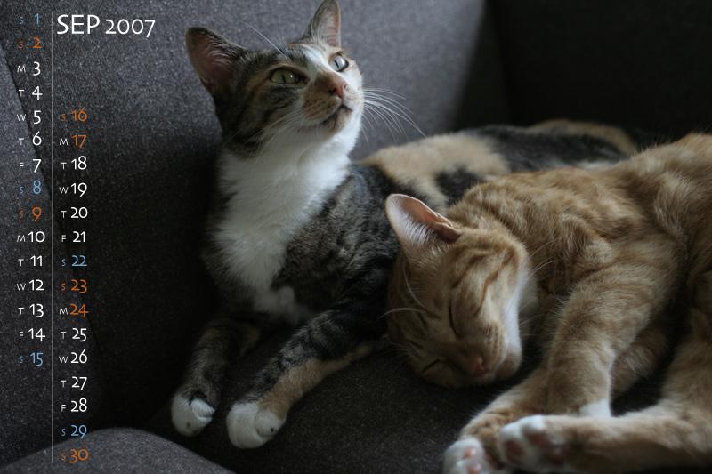 Finderviews cat wallpaper 9 voltagebd Images